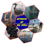 Oil Spill Effects and Cleanup Techniques